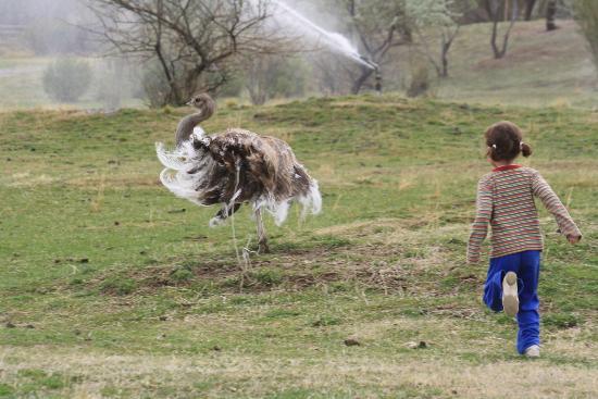 Zoo Bubalco: avestruces en estado libre