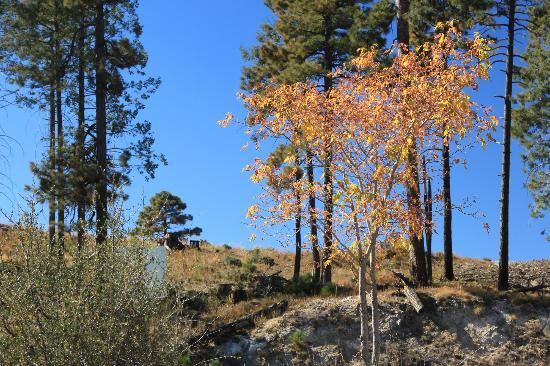 Mt. Lemmon Scenic Byway: Blue Sky