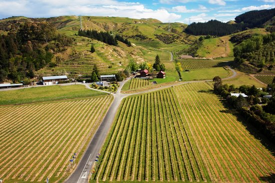 The Kiwiesque Vineyard is located in the famous Esk Valley wine growing region
