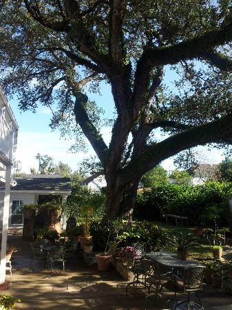 Ashton's Bed and Breakfast: Hotel & Grounds