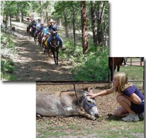 High Mountain Trail Rides: trail ride