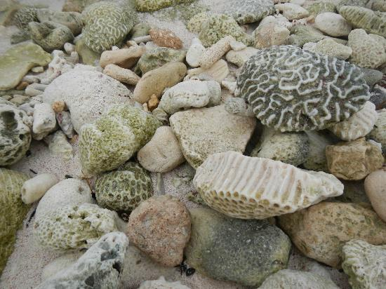 Grand Bahia Principe Tulum: Coral on the beach