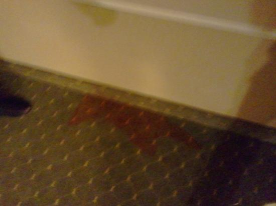 Homewood Suites Pensacola-Arpt (Cordova Mall Area): Huge Red Stain on Carpet