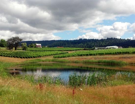 Adelsheim Vineyard: View from Calkins Lane Vineyard