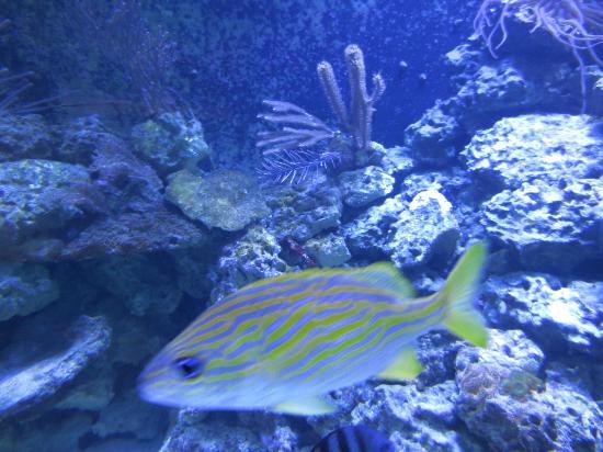 Aquarium picture of florida keys eco discovery center for Florida tropical fish