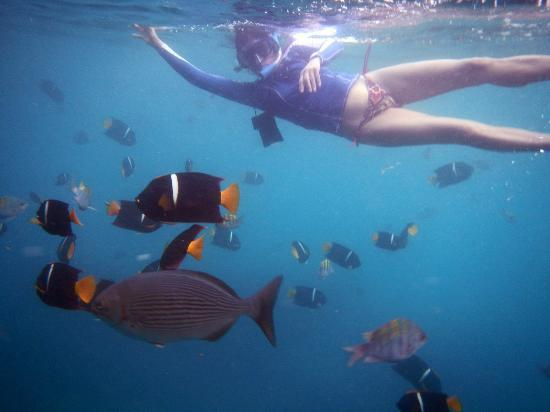 Costa Sur Resort & Spa: Los Arcos snorkeling