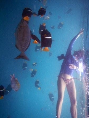Costa Sur Resort & Spa: Los Arcos snorkeling