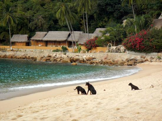 Costa Sur Resort & Spa: Don't stick your head in the sand... Yelapa!