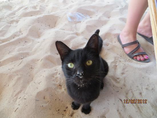 Iberostar Paraiso Lindo: one if the beach cats