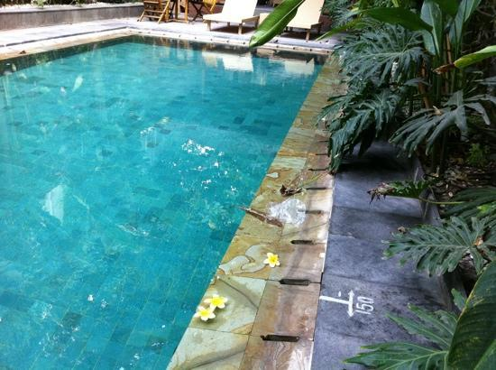 Serela Kuta : dirty small pool