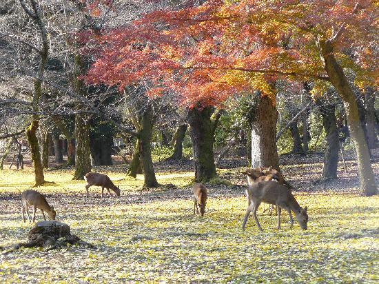 Tranquility - Picture of Nara Park, Nara - TripAdvisor