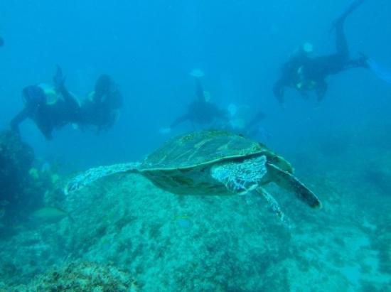 Manta Lodge & Scuba Centre : Diving with the manta Crew