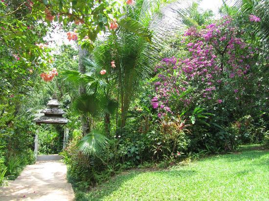 Marina Phuket Resort: jungles 