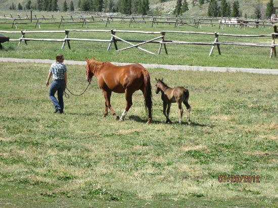 Nine Quarter Circle Ranch: mama and her foal