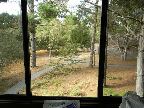 Asilomar Conference Grounds : 1109 Live Oak view toward the north