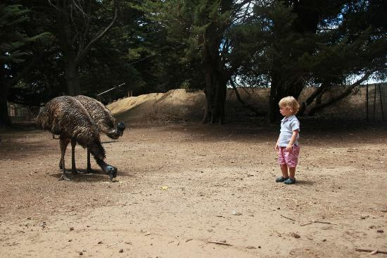 Paul's Place Wildlife Sanctuary: the emu's will not peck your eyes out