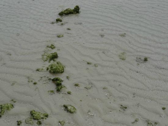 Eef Beach: 強風が造った白砂の波模様