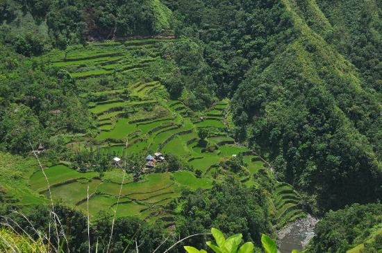 Uncharted Philippines Adventure Travel and Day Tours: rice paddies