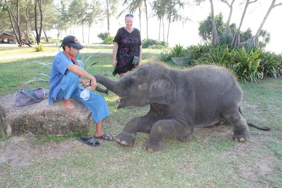 JW Marriott Phuket Resort & Spa: Lucky the Baby Elephant and his trainer