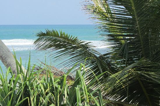 แอซซัวร์ บีช วิลลา: Beach view through palm trees