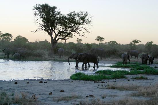 Okavango Delta: Elephants come to water as the sun goes down