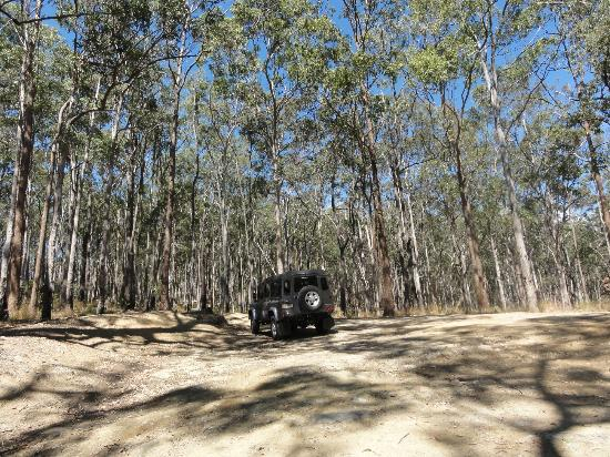Southern Cross 4WD Tours: In the forest on Tamborine mountain