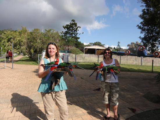 Southern Cross 4WD Tours: Feeding the birds at O'Reillys lookout