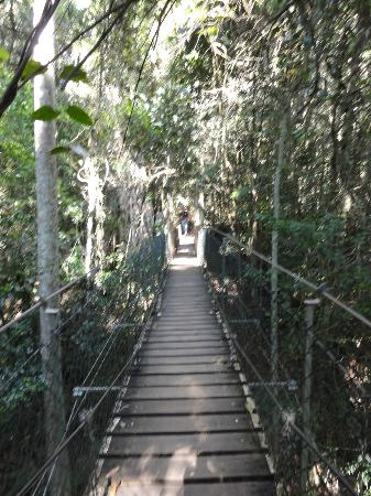 Southern Cross 4WD Tours: O'Reilly tree top walk