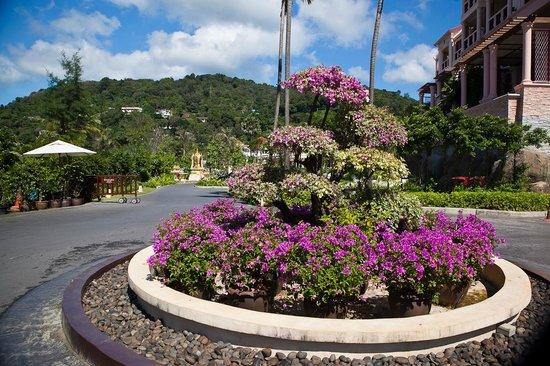Centara Grand Beach Resort Phuket: Различные клумбы и кусты