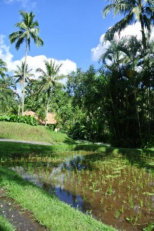 Four Seasons Resort Bali at Sayan: rural scenery