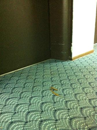 Hollywood Beach Tower: Feces on the carpet, probably from a toddler