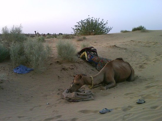 Mystic Jaisalmer Hotel: Having a rest!