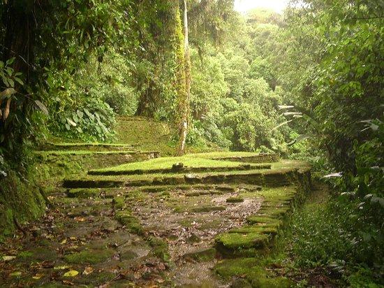 Lost City: Terrazas - Ciudad Perdida