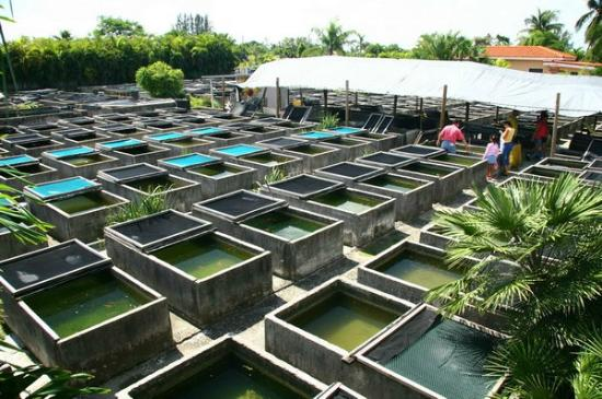 Neighborhood Fish Farm