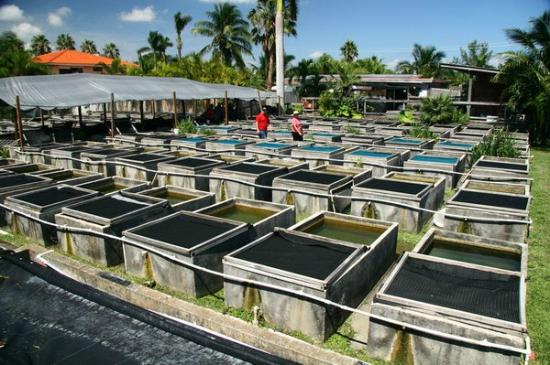 neighborhood fish farm miami lo que se debe saber