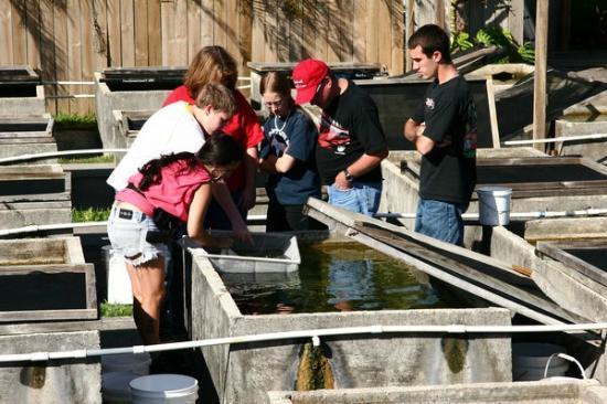 Neighborhood fish farm miami qu saber antes de ir for Fish farms in florida