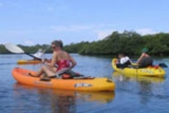 Hotel Bocas del Toro: Kayacking through Mangroves in Bocas del Toro