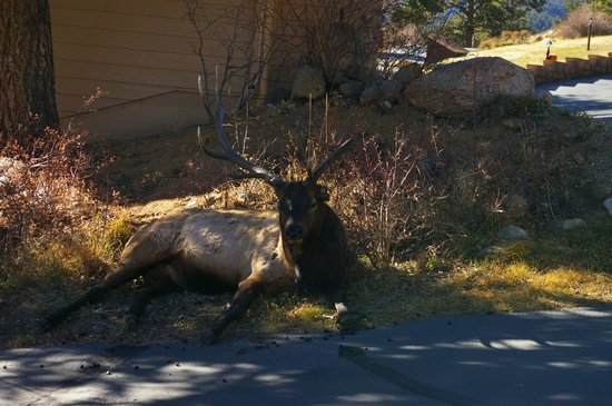 McGregor Mountain Lodge: This is the resident elk who visited us daily.
