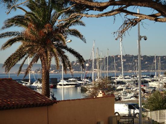 Hotel Royal Bon Repos : palmier du port