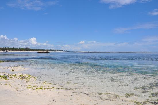 Dorado Cottage: spiaggia davanti al resort