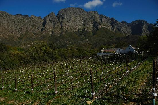Bo La Motte Farm Cottages: Boekenhoutskloof Vineyard