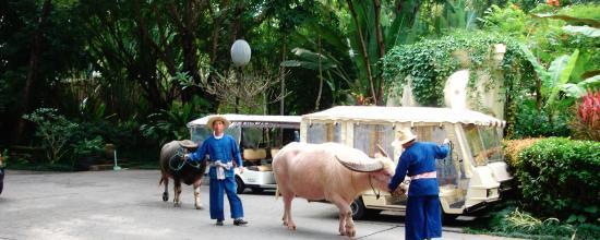 Four Seasons Resort Chiang Mai: Hotel Water Buffalos
