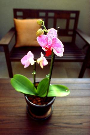 The Ambrose: Orchid on the Porch