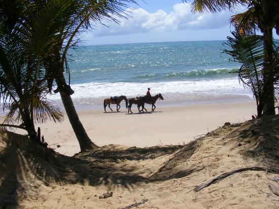 Iberostar Praia do Forte : PLAGE
