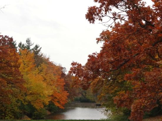 Manner's Park: trees at park lake