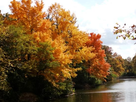 Manner's Park: beautiful trees at park lake