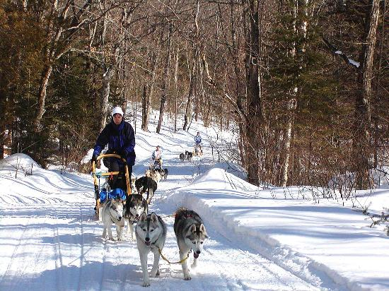 Haliburton, Canada : Dogsledding fun