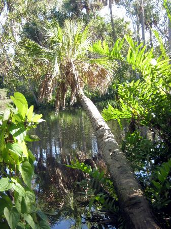 James E Grey Preserve: palms