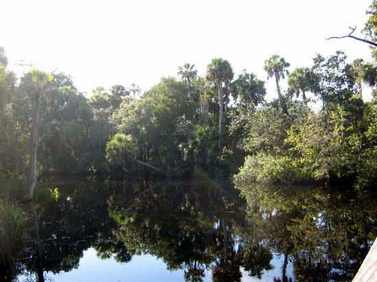 James E Grey Preserve: Pithlachascote River