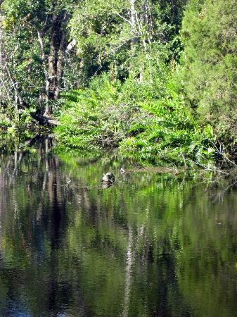 James E Grey Preserve: Pithlachascote River 2.